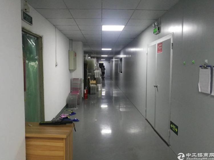 西乡九围12500平方独门独院厂房带装修-图3