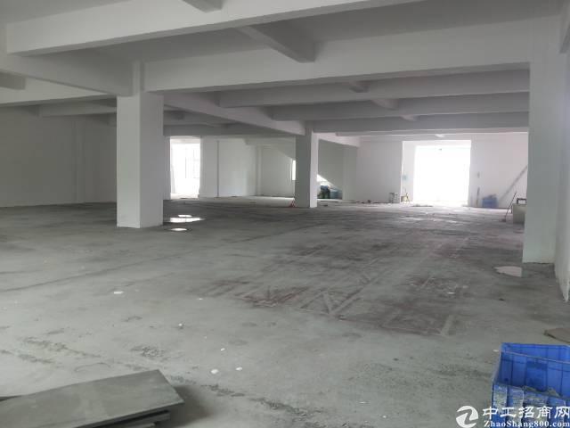 大朗镇松木山新出标准厂房800平方米高4米租18块