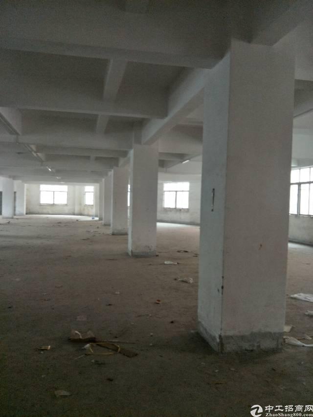 标准厂房一楼,带牛角,现成装修,超低价格