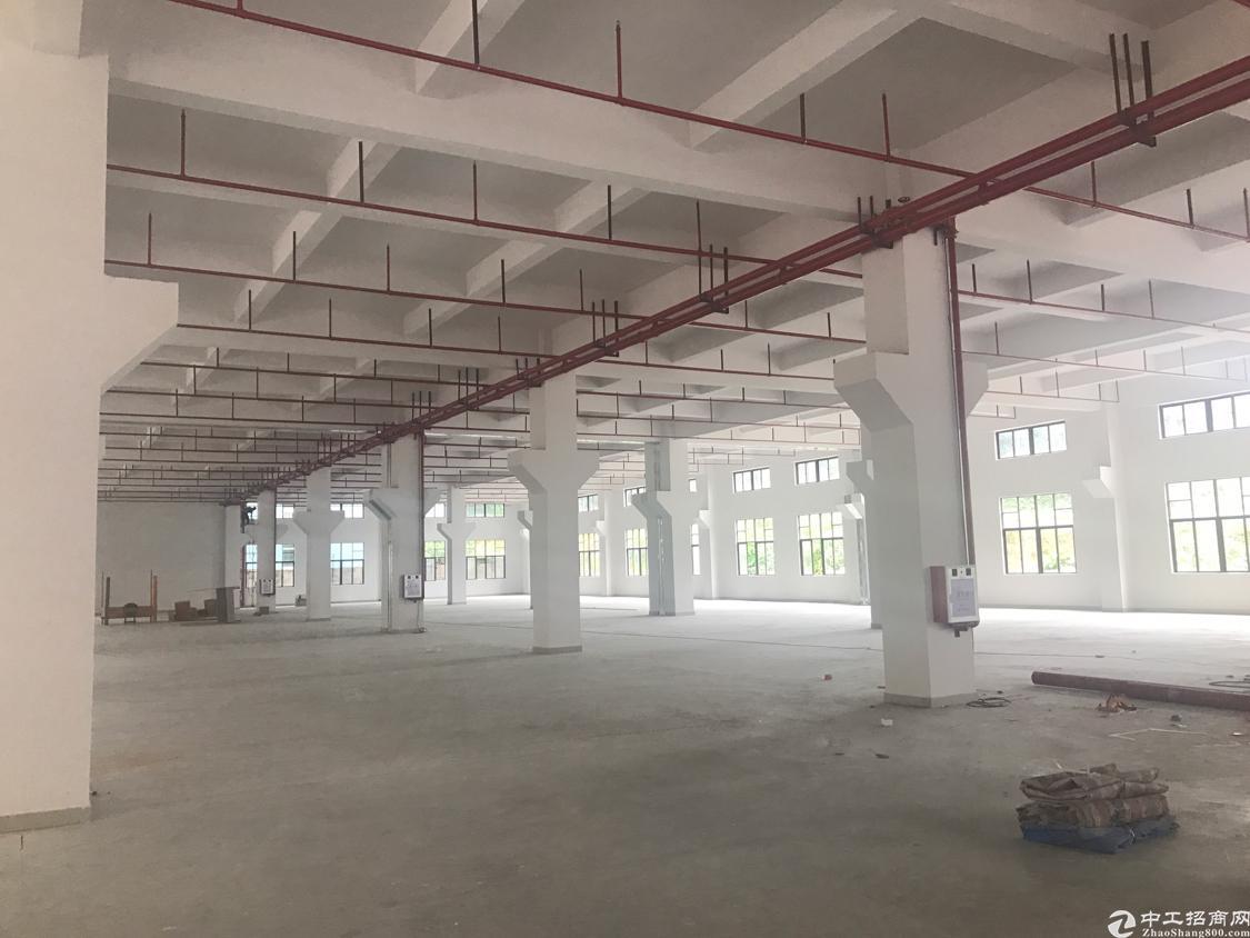 全新标准厂房 带牛角 消防喷淋 成熟工业区 好招工