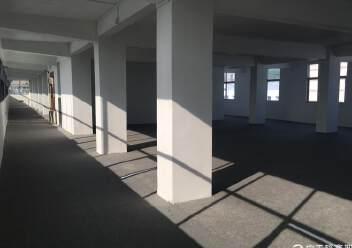 凤凰山脚下,全新厂房出租。图片6