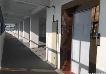 凤凰山脚下,全新厂房出租。图片4