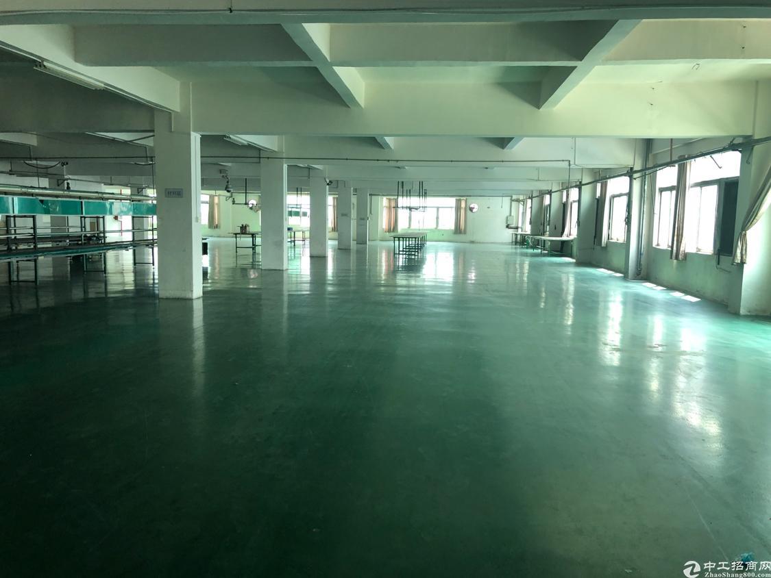 新出租客分组楼上带地坪漆1500平方米标准厂房