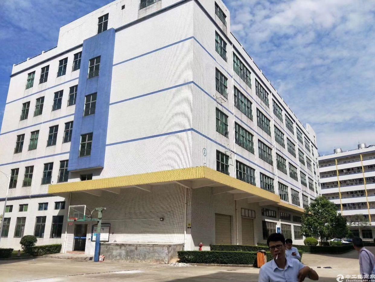 龙华新区一楼6000平标准厂房层高7米可分租