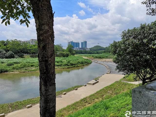 龙岗河边公寓4600平方4层招租合同9年