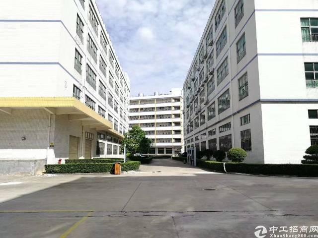 公明镇龙大高速出口新出厂房1楼1300平方带牛角招租