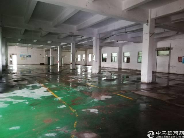 公明西环新出一楼2000平米精装修厂房-图4