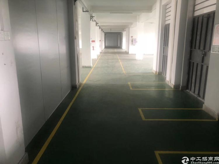 坪山新出独门独院厂房精装修出租,配3吨电梯