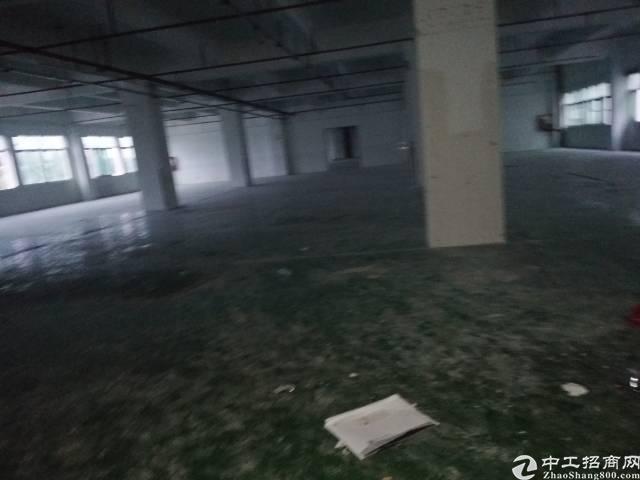 龙华清湖地铁站附近新出厂房800平,大小可分租,可做小加工仓