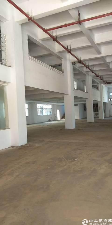 广州新塘标准厂房出租