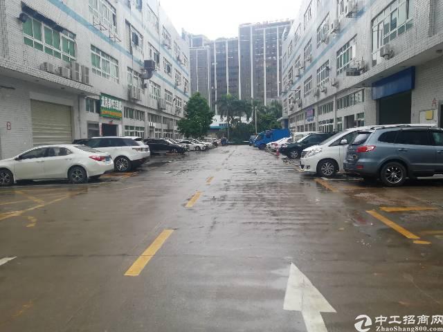 大浪南路龙华汽车站附近新出一楼250平米