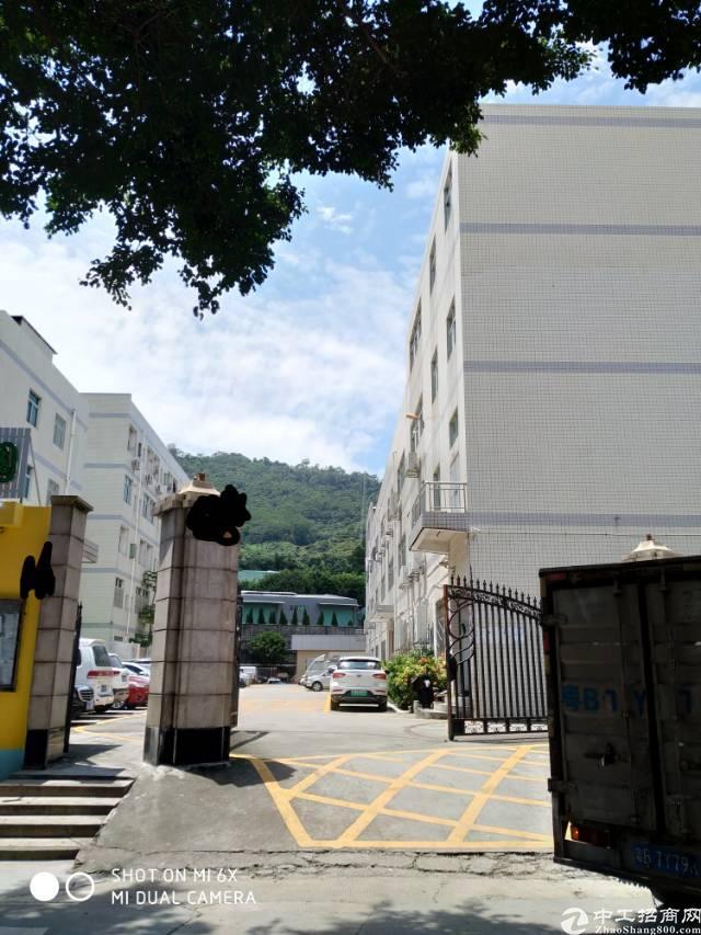 西乡九围洲石路附近大型工业园一楼标准厂房780平方出租