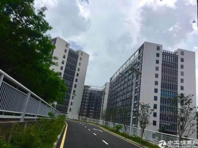 龙岗中心城电商产业园直租面积300平图片2
