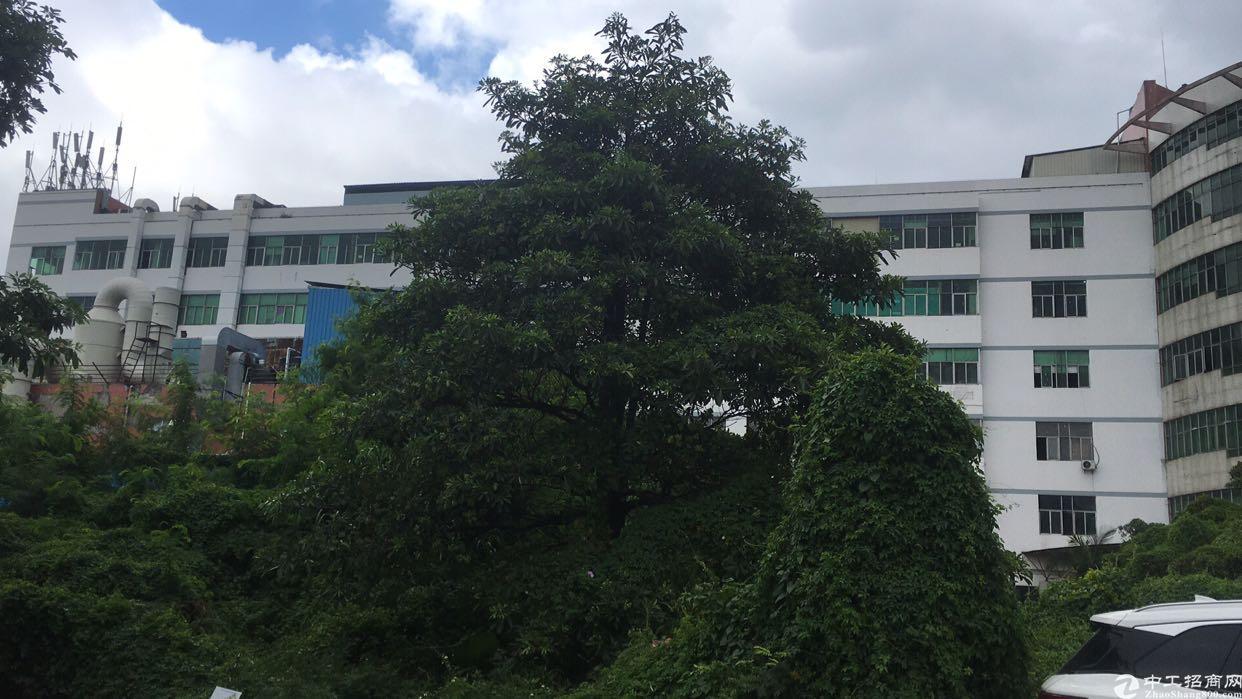 西乡鹤洲107国道口整层2400平方出租,租金32元月。