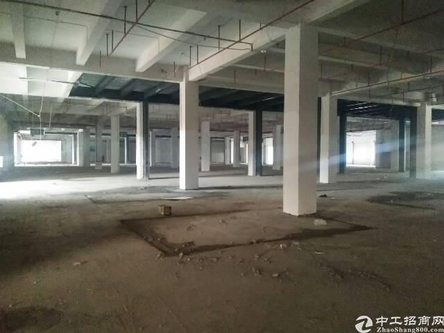 谢岗原房东标准一楼6.5米厂房,