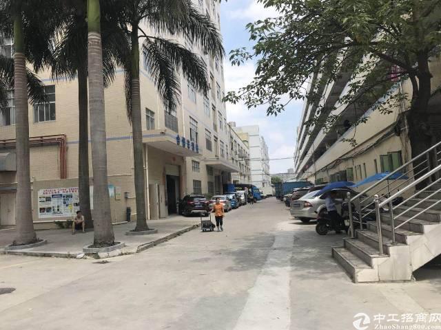 公明上村独院滴水9米钢构厂房1500平方出租-图2