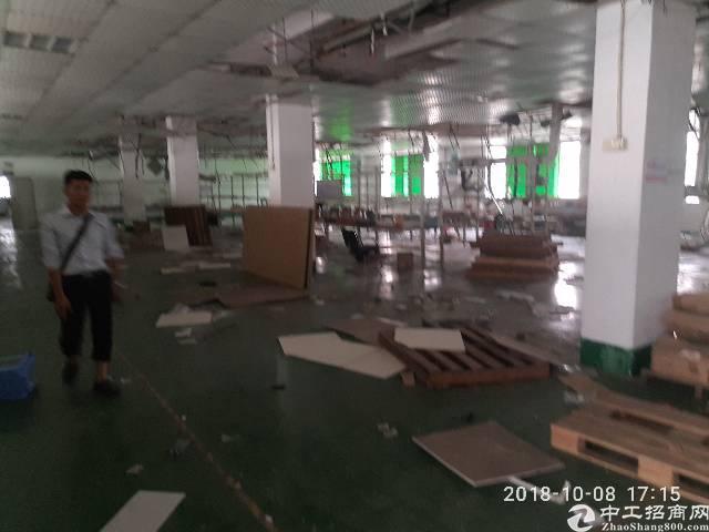 松岗潭头第三工业区新出厂房1600平-图3