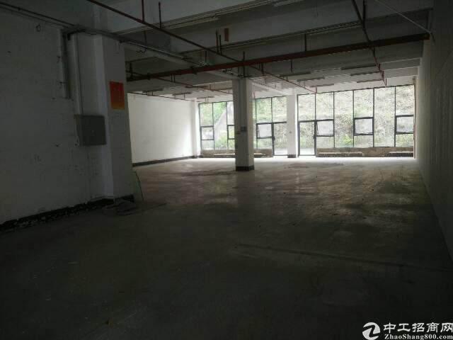 西丽园林式办公室出租图片2
