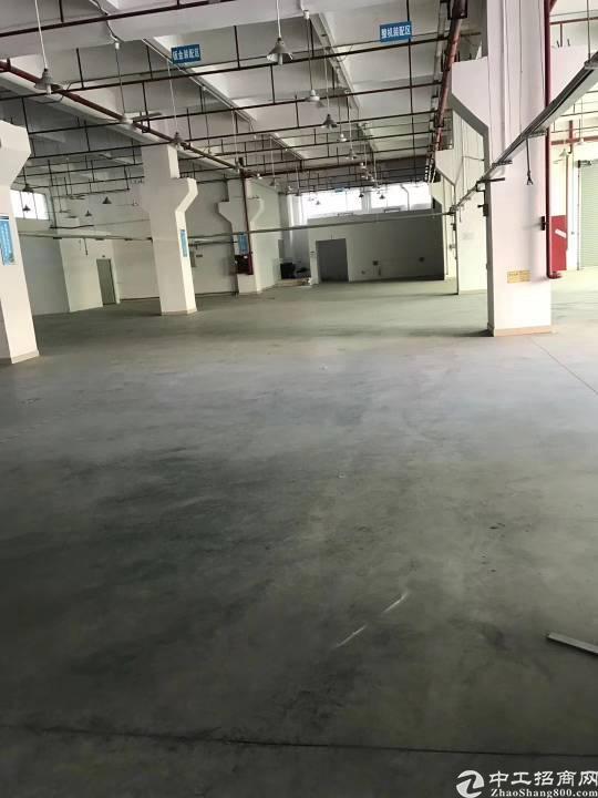 公明李松蓢大型工业园一楼1500平方带牛角出租!-图2