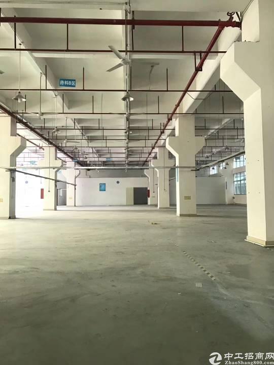 公明李松蓢大型工业园一楼1500平方带牛角出租!