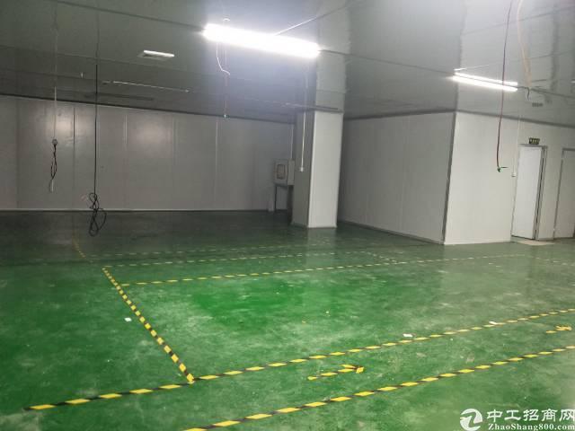 新田新出带装修厂房出租,380平米,不要转让费。