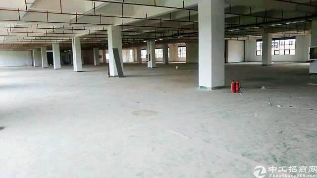 龙华汽车站后原房东全新独院创意园区直租图片5