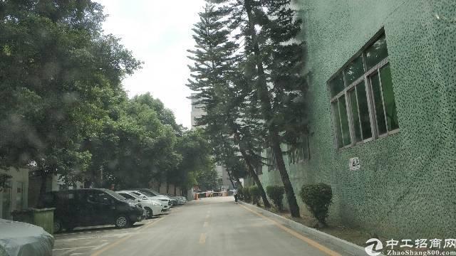 九围簕新村新出一楼1050平工业厂房