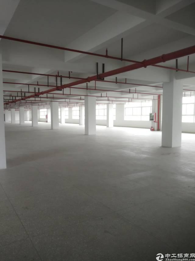 横岗六约原房东独院全新厂房6500平米招租