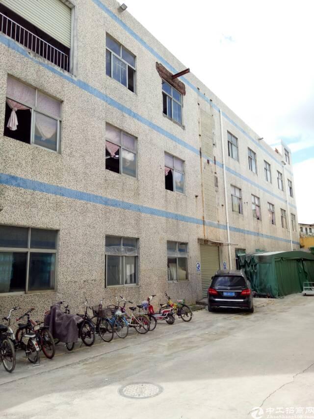 坪山碧岭标准厂房一楼1100平方分租