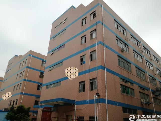 (出租)西乡九围独院厂房4800平带装修,500平起分租)