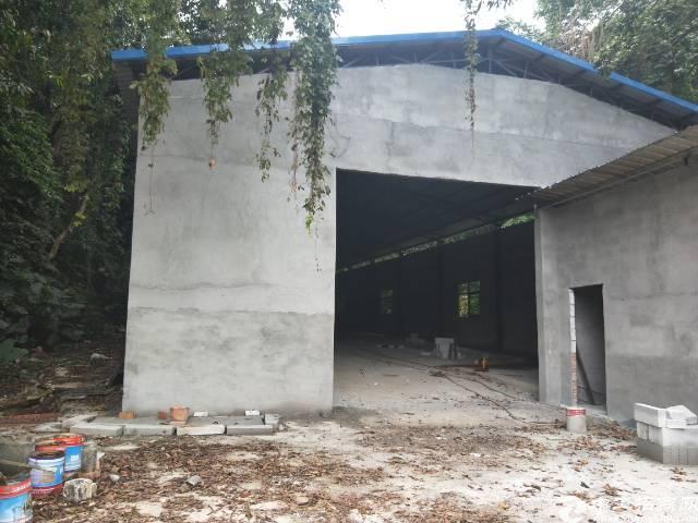 清溪原房东单一层钢构厂房800平方,无公摊可做各行各业!