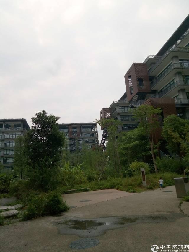 泰桦梧桐岛原生态花园式办公500平超长免租期