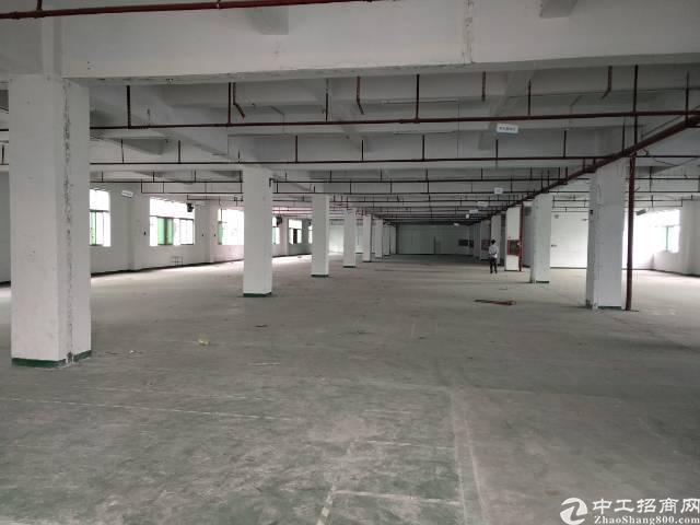 深圳沙井洪田高度出口附近新出装修1000平方厂房出租