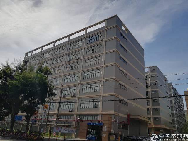 西乡鹤洲1076平标准厂房出租