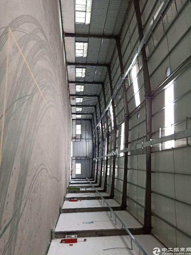 公明下村原房东钢构厂房出租9800平方实际面积分租700起分-图7