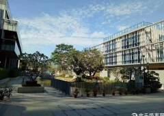 东莞南城写字楼长在森林里的写字楼低价售