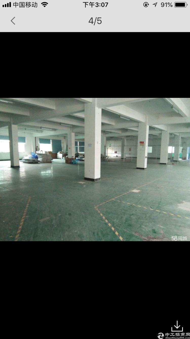 平湖一楼2000平厂房出租-图5