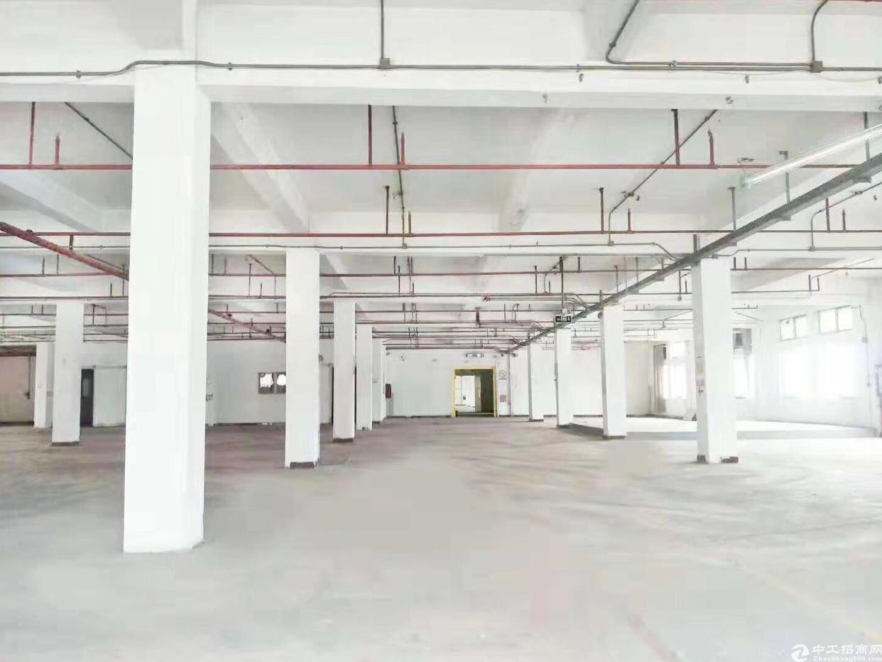 龙华汽车站旁一楼厂房2000平,适合各种行业,层高6米