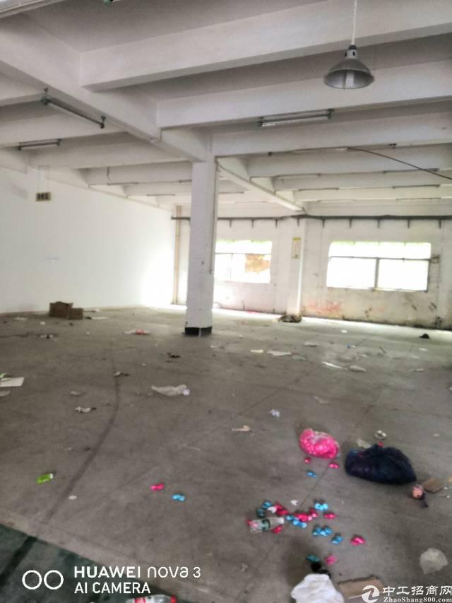 平湖镇新出独院厂房出租-图6