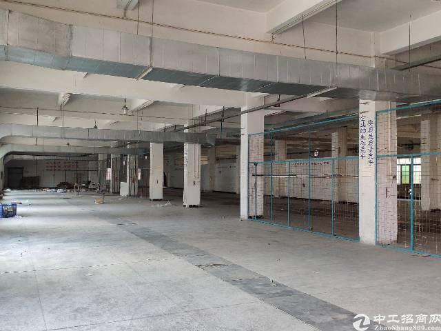 东坑镇中心1560平米标准厂房出租