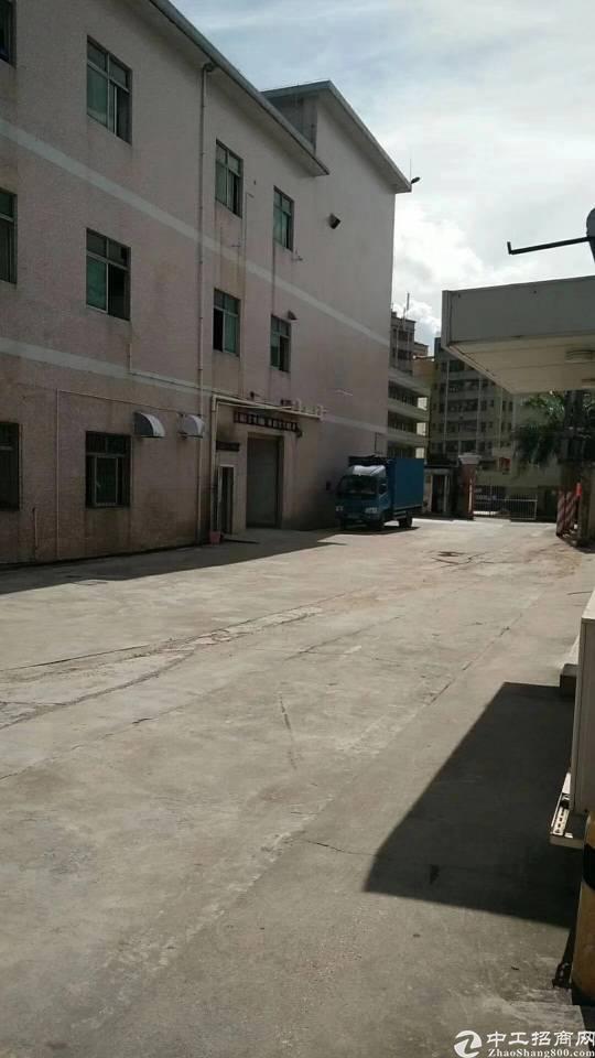 观澜桂花红本厂房出租:标准厂房一楼2300平方,可分租