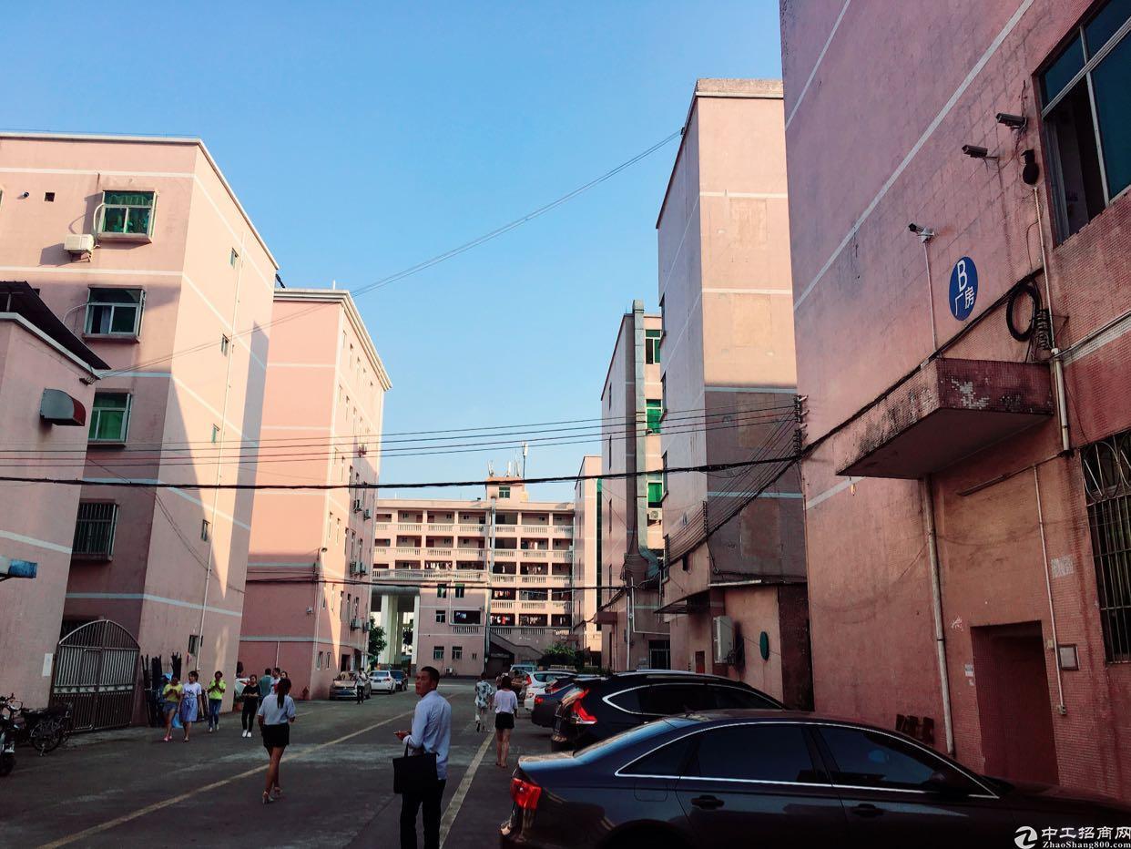 龙岗新生新出三楼600平方精装修办公室厂房