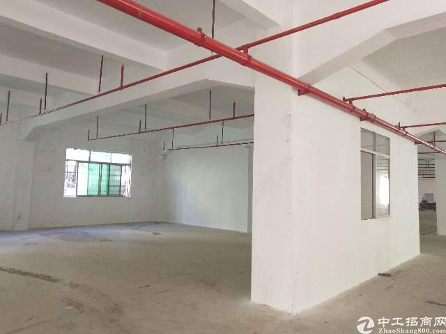 惠阳淡水新出原房东独门独院标准厂房12800平-图5