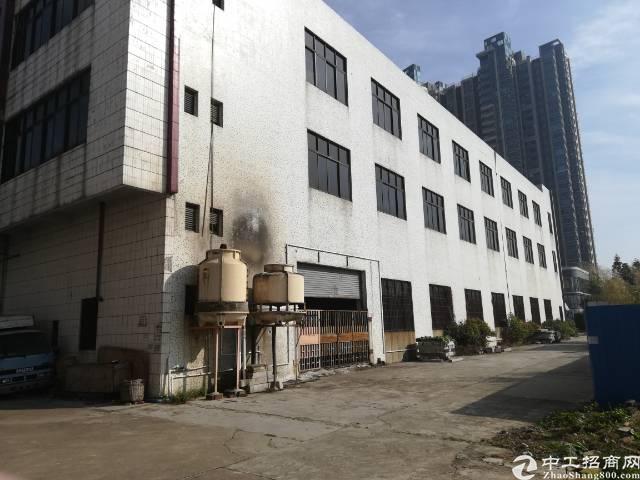 茶山新出原房东独院标准厂房3000平