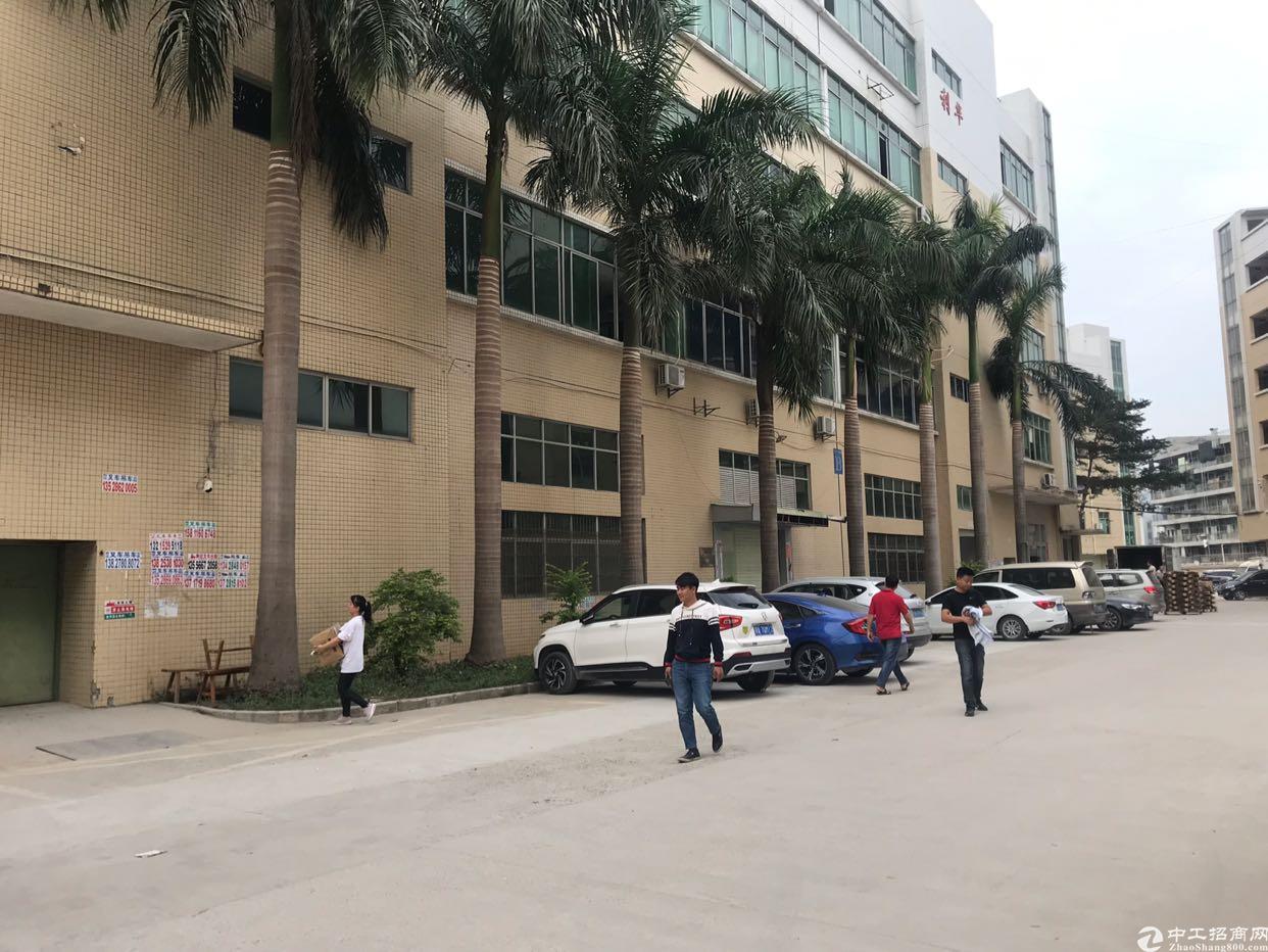 观澜新田一楼1400平方滴水6米带消防喷淋厂房出租