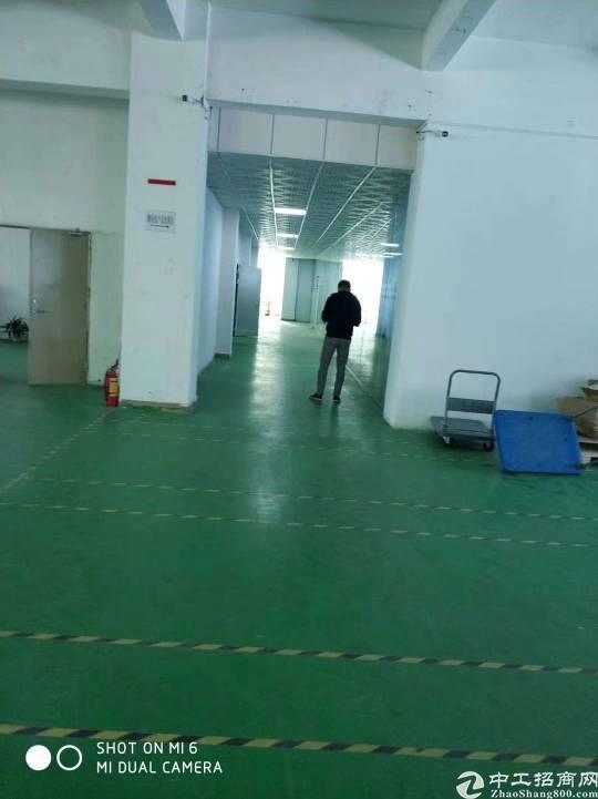 坂田上雪新原房东厂房700平米实用率高