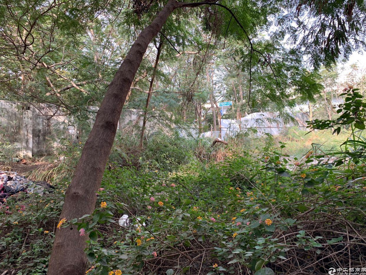 西乡主干道旁,独门独院厂房面积约5000平方