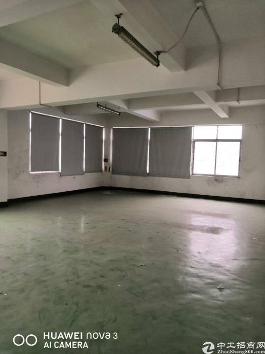 布吉天虹旁新出450平带装修标准厂房出租
