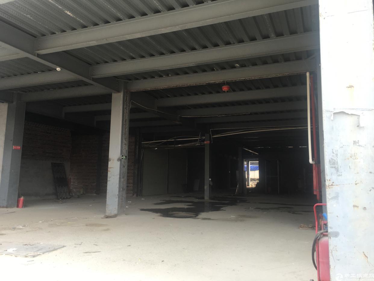 松岗107国道旁新出标准钢结构2500平方