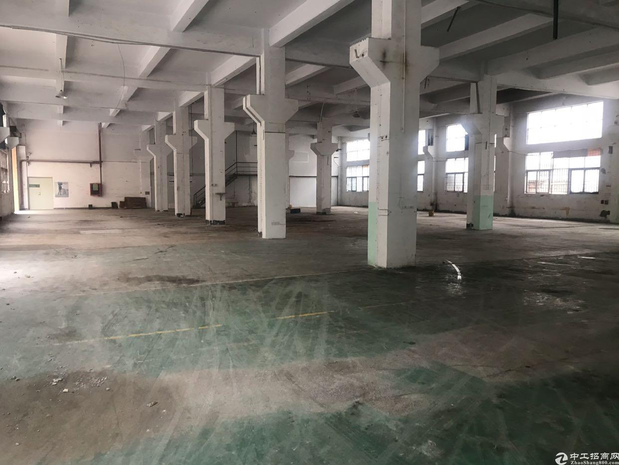 沙井新出原房东厂房一楼1300平带牛角